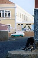 Dog on a street in Mindelo, Sßo Vicente, Cape Verde, Africa