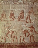 Egypt - Cairo - Ancient Memphis (UNESCO World Heritage List, 1979). Saqqara. Necropolis. Painted reliefs. Agricultural works