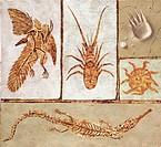 Zoology: Fossils - Art work