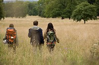 Group, hikes, leisure time, nature, grass, broached, back view, outside,