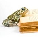 animals, curiosity, close, book, alfred