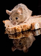 bread, aliment, bakery, animals, animal, alfred
