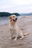 close up, animal, looking away, domestic animal, dog, closeup, pet