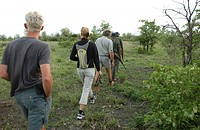 African Safari - morning hike Kruger National Park - South Africa
