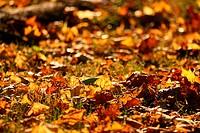 foliage, background, day, burkhard, brown, autumn