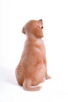 looking up, animal, domestic animal, golden retriever, dog, close up, pet