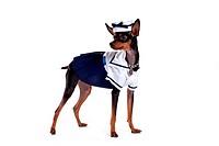 companion, pinscher, house pet, canines, domestic, miniature pinscher