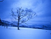 snow scene, landscape, winter scene, sky, mountain, winter, scenery