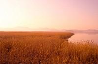 eulalia, sunset, plant, scenery, nature, plants, river