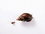 small snail following a big snail