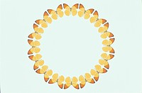 The Round Frame Of A Butterfly