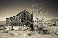 Abandoned Mojave Desert ranch in winter, Mojave National Preserve, Cima, California, USA