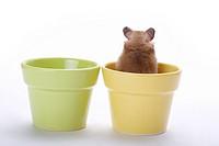 Hamster in flower pot, rear view