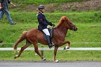 Deutsche Islandpferde_Meisterschaft, Töltprüfung