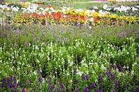 Beautiful flower bed in Taoyuan, Taiwan, China, Asia