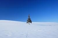 Tree in snowfield against blue sky