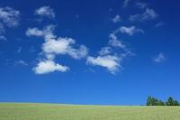 Green grassland against blue sky