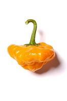 scotch chili pepper, jamaica