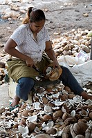 Cutting Coconut Copra for Oil Production, South Trinidad
