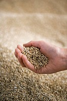 Close_up of hand holding seed
