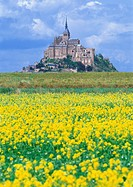 Mont_Saint_Michel and Field Mustard