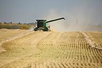 Combine harvesting wheat field
