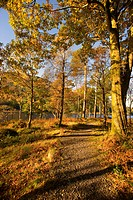 Trail through trees with fall colors, Argyll and Bute, Scotland