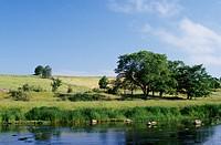 Grassland beside lake