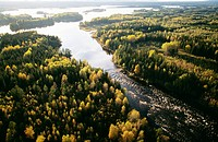 River flowing amidst dense forest
