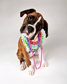 Dog with necklaces