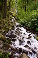 Stream from Wahkeena Falls, Oregon, USA