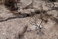 Aerial photograph of the burned Banias national park