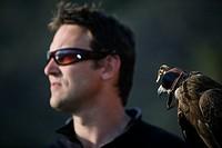 A Black Kite bird Milvus migrans and a falconer