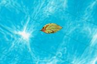Leaf Drought Buoy in Swimming pool, São Paulo, Brazil