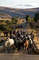 Madagascar, Eastern Highlands, breeder and herd of zebu on National Road 7, Andringitra Massif, region of Betsileo ethnic group