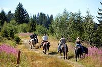 France, Savoie, Les Saisies, horseback riding in the Beaufortain massif