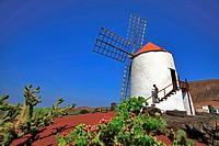 Spain, Canary Islands, Lanzarote Island, cactus garden