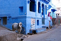 India, Rajasthan State, Jodhpur, the old city and its blue houses