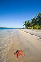Starfish on Star Beach, Colon Island, Bocas del Toro Province, Panama