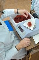 Saffron stigmas on scale, Villafranca de los Caballeros, Toledo province, Castilla_La Mancha, Spain, weighing