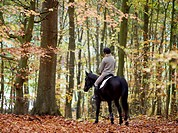 A woman riding a horse in autumn Sweden.