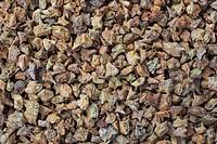 medicinal plant Tribulus, fruits or seeds of Tribulus terrestris, Bai Ji Li