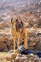 Egypt, Sinai Peninsula, Saint Catherine, Djebal Valley, bedouin