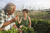 Grandfather and grandson with strawberry