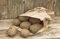 New Potatoes, ´Coleen´ variety, in brown paper bag, in potting shed, England