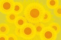 Sunflowers, close_up