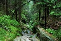 Uttewalder Ground, Saxon Switzerland National Park, Lohmen, Saxony, Germany