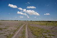 Cumulus clouds over track in african bush, central kalahari game reserve