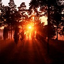 Sweden _ Sunbeams radiating through trees in a forest