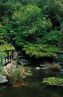 Gardens St Mawgay, Cornwall _ Japanese Garden